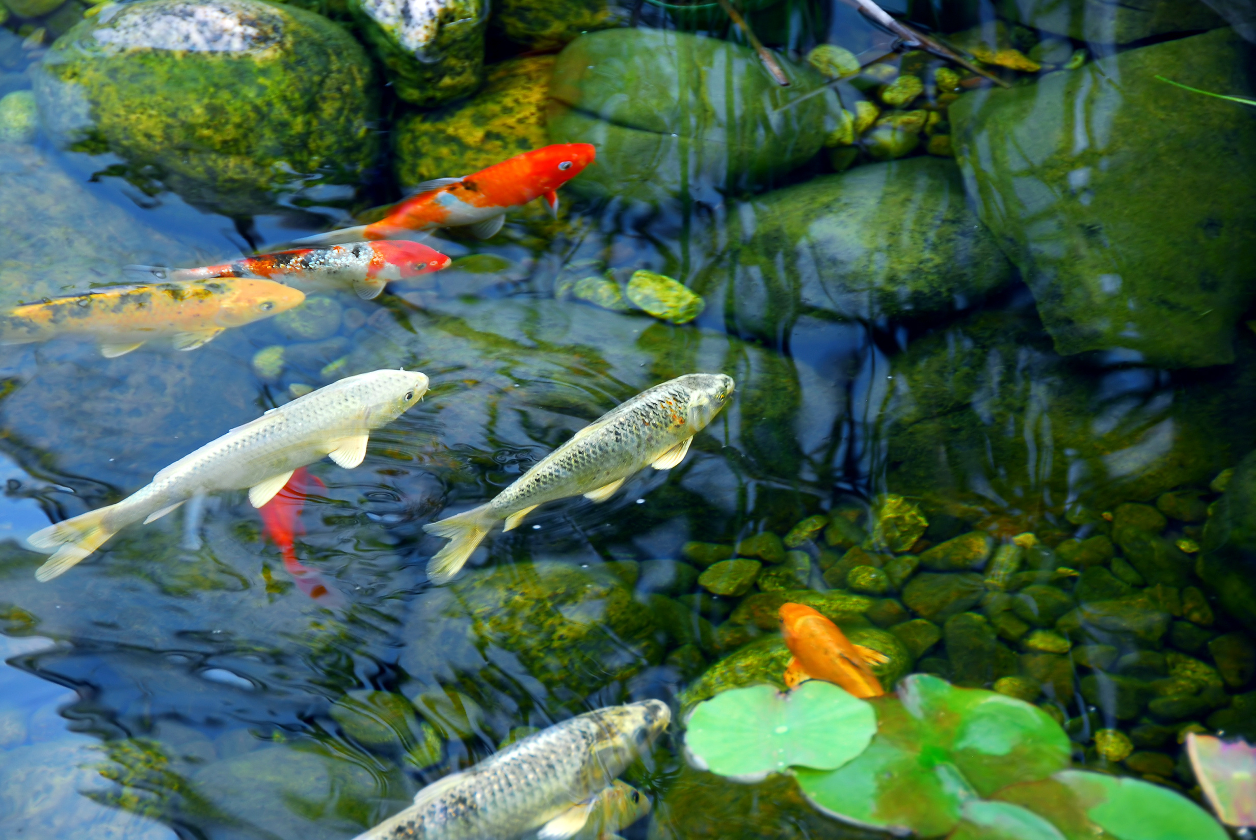 Pond Supplies 1