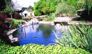 Protecting Your Pond – Stopping Herons and other Predators